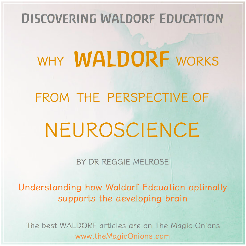 Why Waldorf Educations works from the perspective of Neuroscience from Dr Reggie Melrose on The Magic Onions Blog