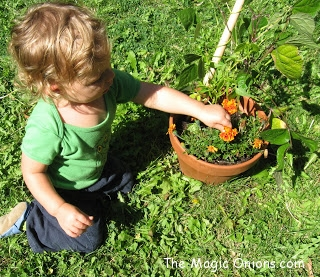 No in Waldorf Education - Discovering Waldorf - www.theMagicOnions.com