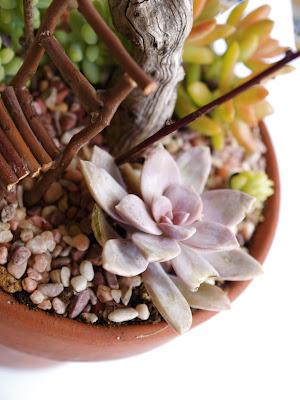 Tutorial : Make a Succulent Fairy Garden : www.theMagicOnions.com