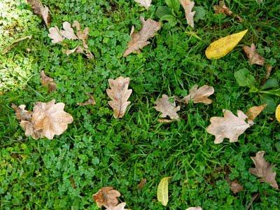 An Autumn Poem.