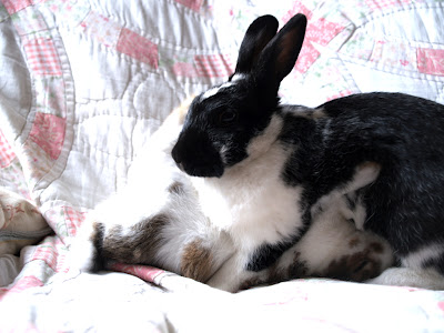 Bunny Update