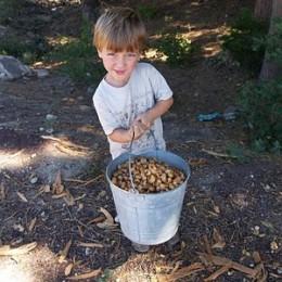 Collecting Acorns.