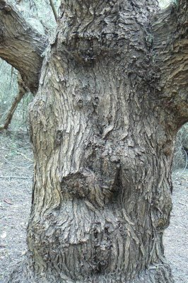 The Face In The Tree.