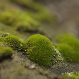 A Mossy Stone