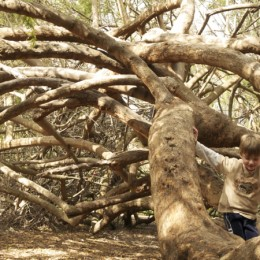 Discovering Waldorf :: Why Kids Need Nature with Richard Louv