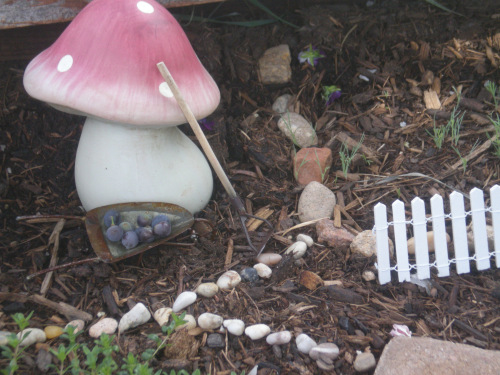 Fairy Garden Feature :: 2013 :: One