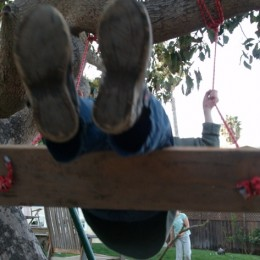 Let's Make a Tree Swing