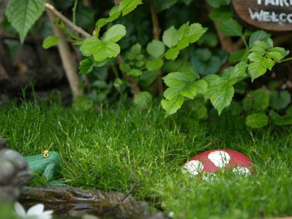 Fairy Gardens on The Magic Onions - www.theMagicOnion.com
