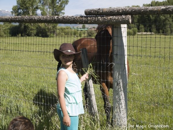 Summer Vacation in Jackson Hole