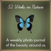 52 Weeks in Nature : www.theMagicOnions.com