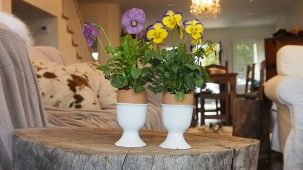 Planting Mini Pansies in Egg Shells for Easter : www.theMagicOnions.com