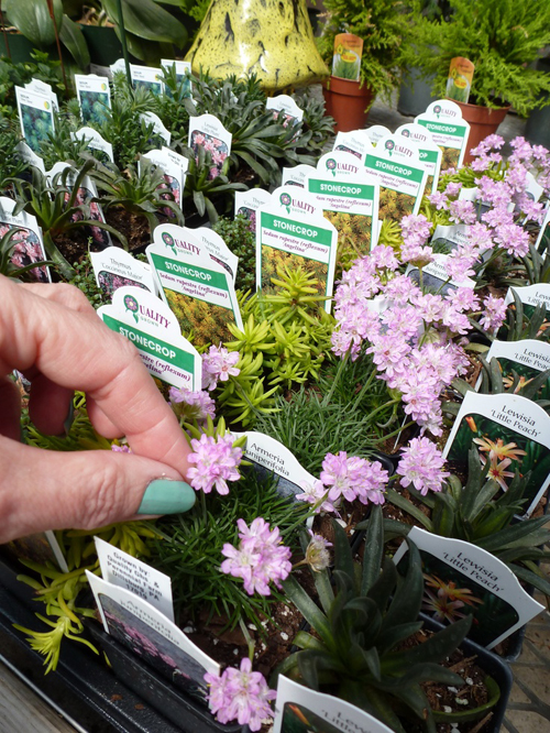 Exceptional Choosing The Right Plants For Your Childu0027s Fairy Garden   The Magic Onions
