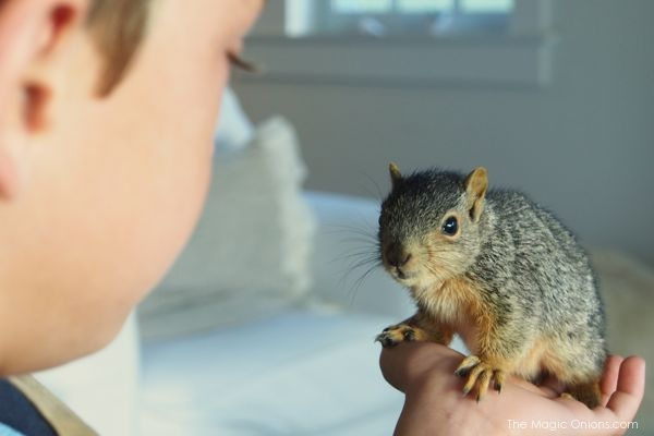 Meet Timone the Baby Squirrel : The Magic Onions Blog : www.theMagicOnions.com