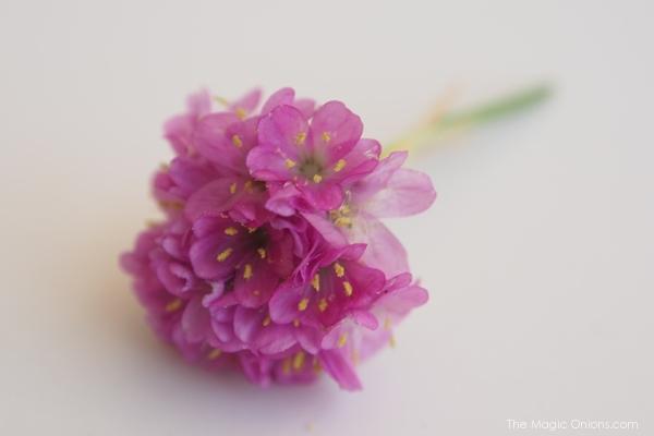 The Magic Onions Blog : www.theMagicOnions.com