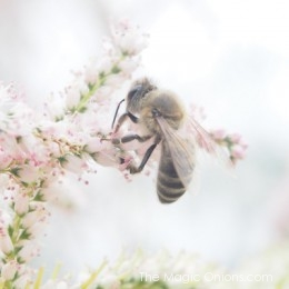 Honey Bees are Amazing!