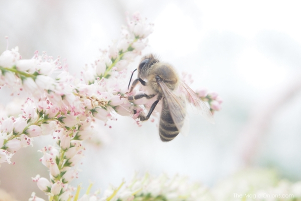 Save the bees : The Magic Onions Blog