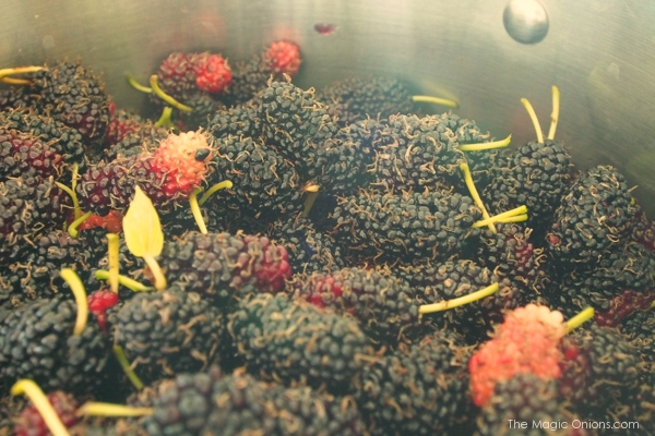 photo of a pot of mulberry jam