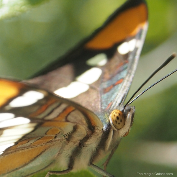 photo of a butterfly in Southern California
