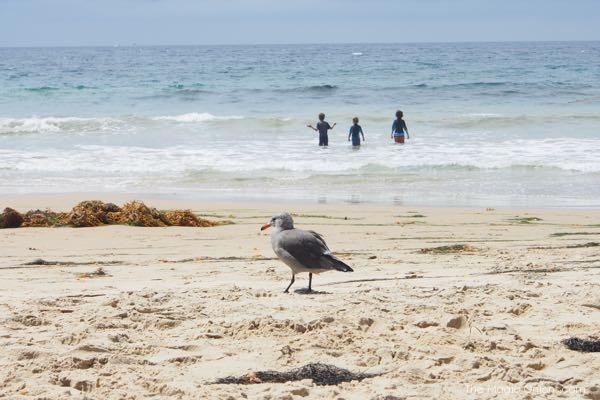 Seagull photo at Crystal Cove Beach