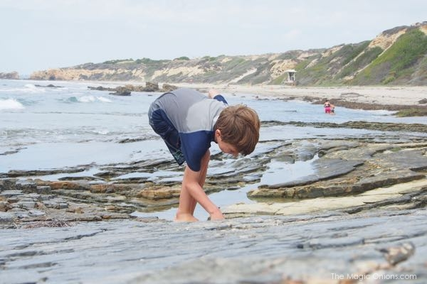 Rock pools at Crystal Cove Beach teaming with life photo