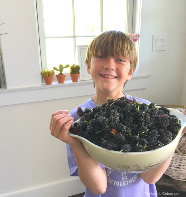photo of a bowl of mulberries