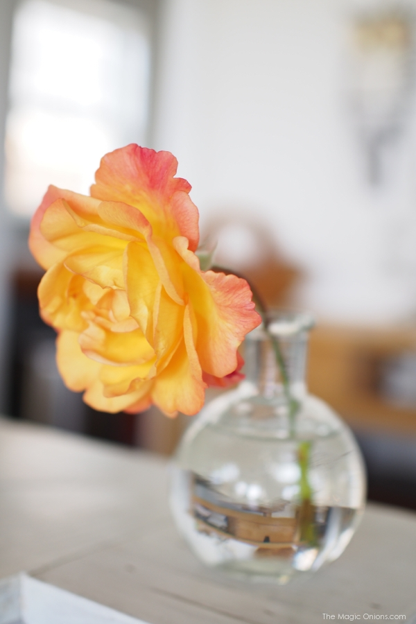 photo of a beautiful apricot rose