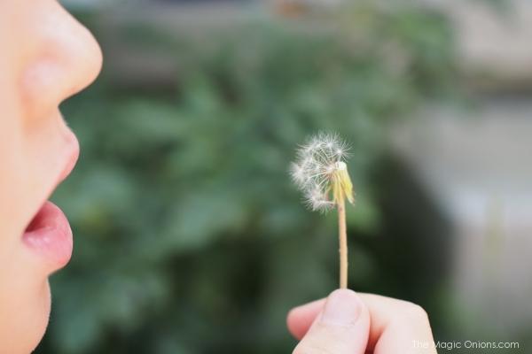photo of boy blowing a dandelion
