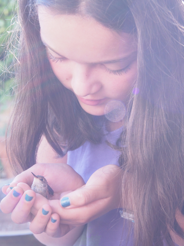 Feeding our Baby Hummingbird