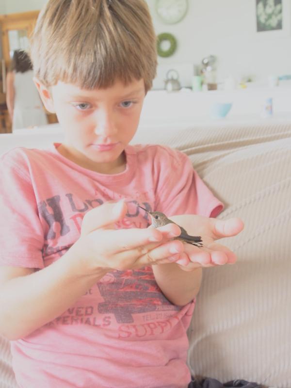 Baby Hummingbird photo The Magic Onions  www.theMagicOnions.com 309