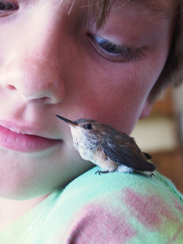 Baby Hummingbird Photo The Magic Onions : www.theMagicOnions.com 118