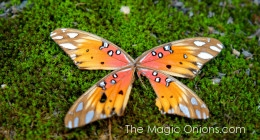 Fairyland Butterfly Wing :: www.theMagicOnions.com