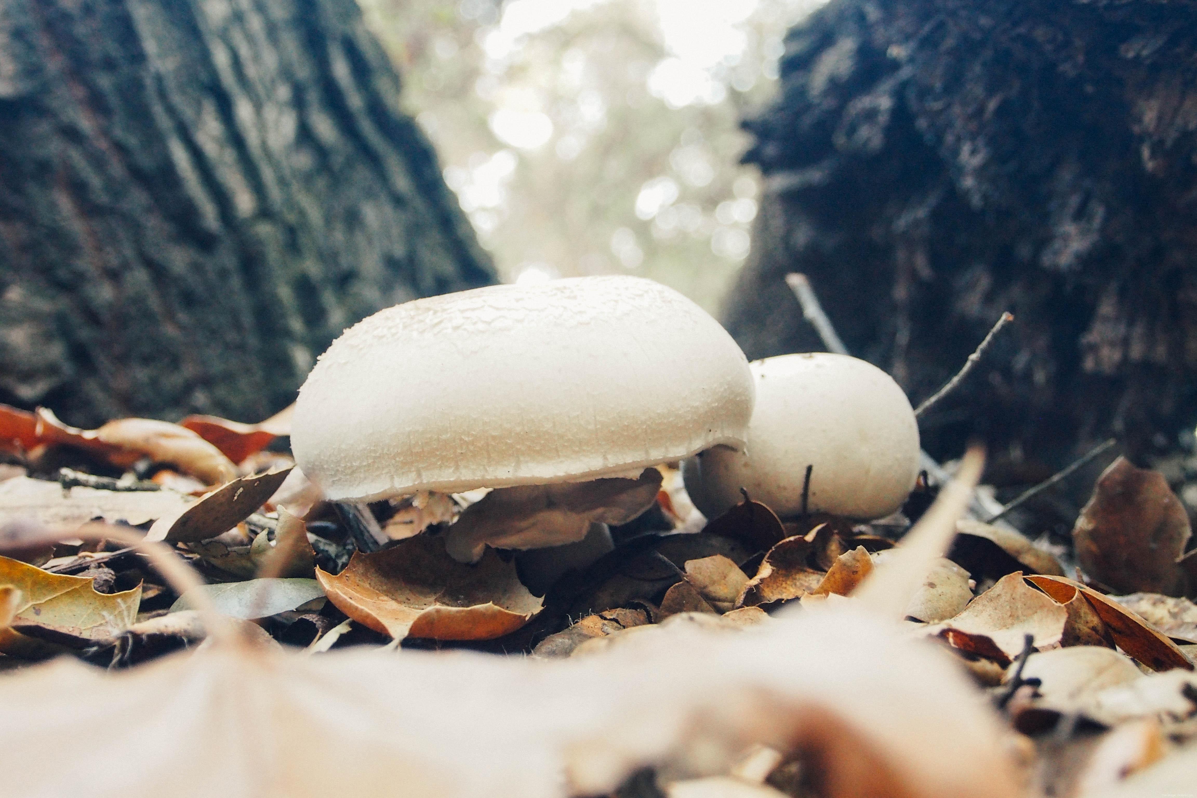 Gorgeous Mushrooms :: www.theMagicOnions.com
