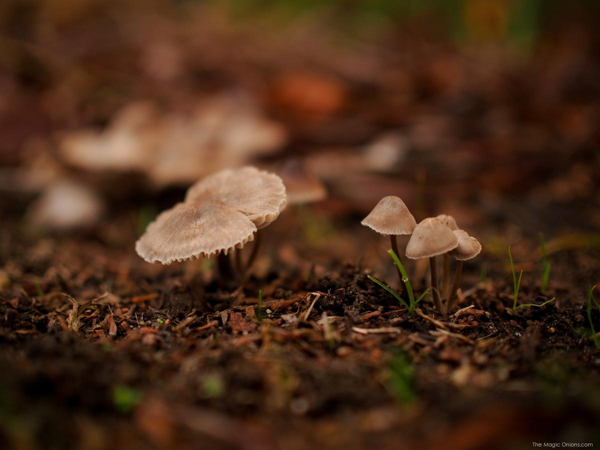Mushroom Nature Walk :: www.theMagicOnions.com