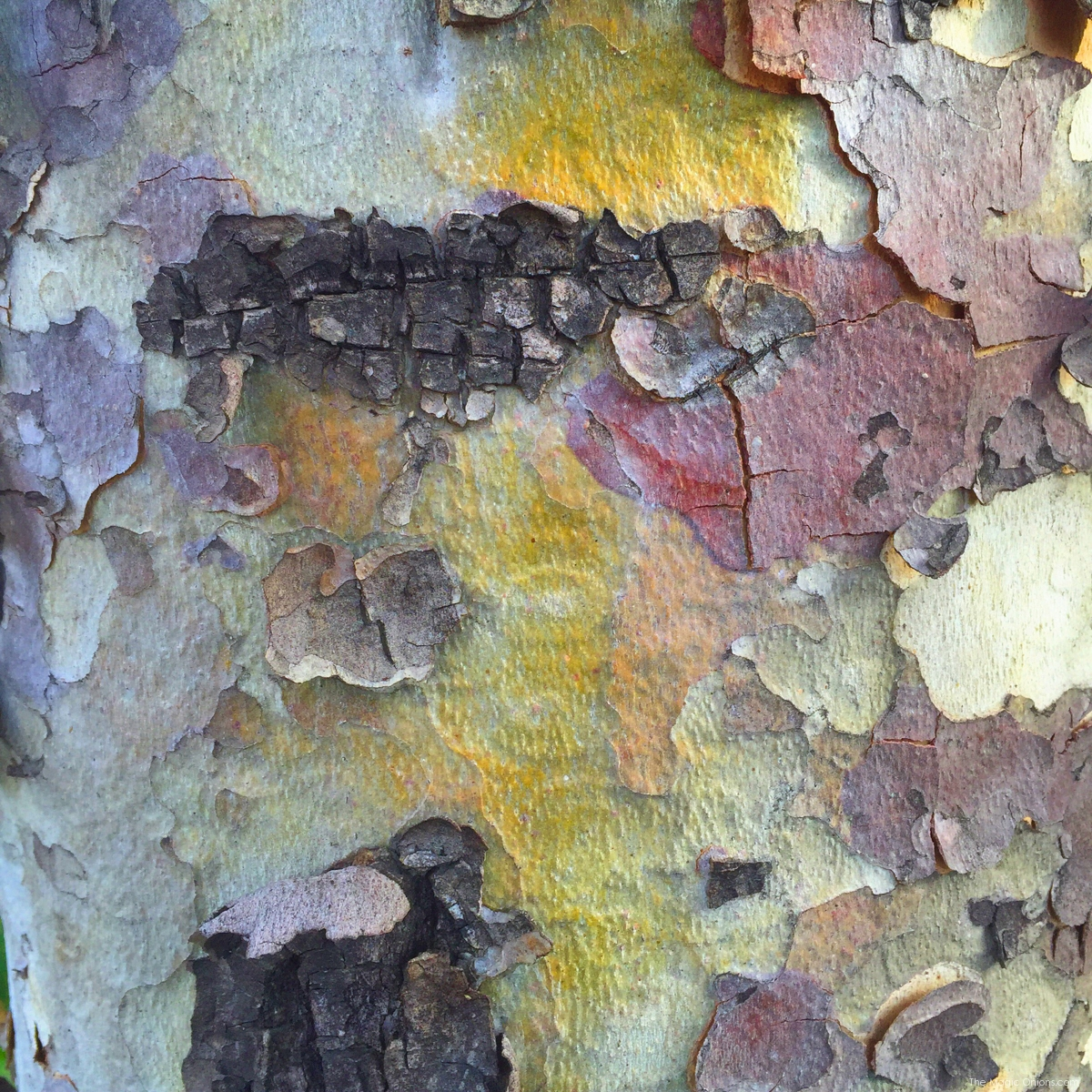 Bark :: Nature Photos -- www.theMagicOnions.com - (1 of 10)