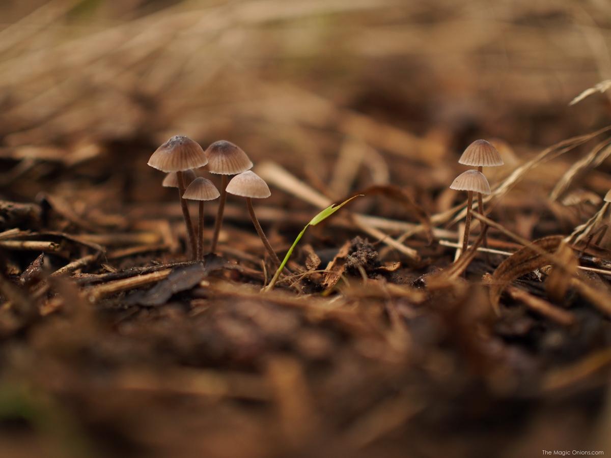 Mushrooms : Nature Photos -- www.theMagicOnions.com