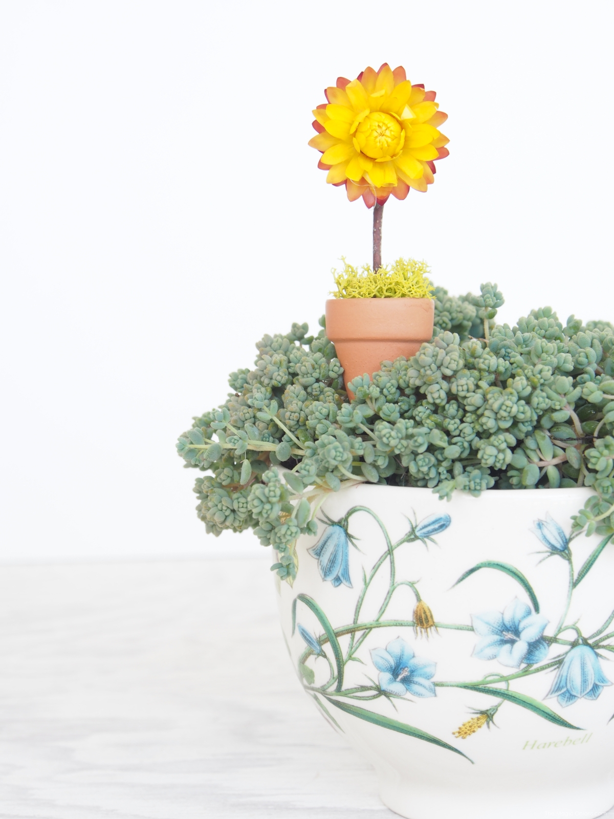 Flowerpot in my Fairy Garden in a Teacup :: DIY Tutorial :: www.theMagicOnions.com