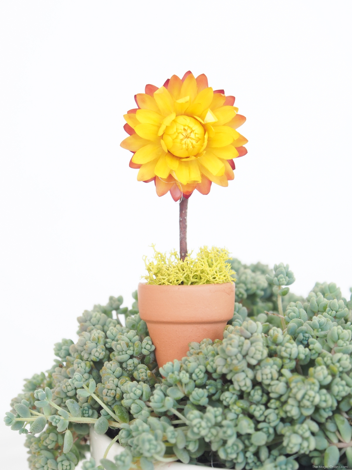 Make a delightful mini SUNFLOWER pot plant for your fairy garden with this easy DIY tutorial on The Magic Onions blog