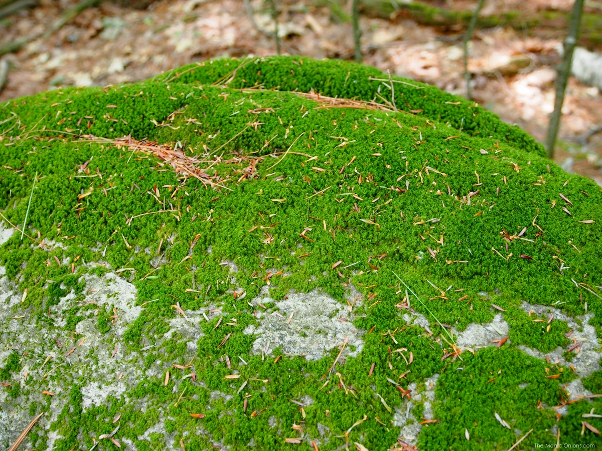 Moss Photo, Keene, New Hampshire, on The Magic Onions Blog