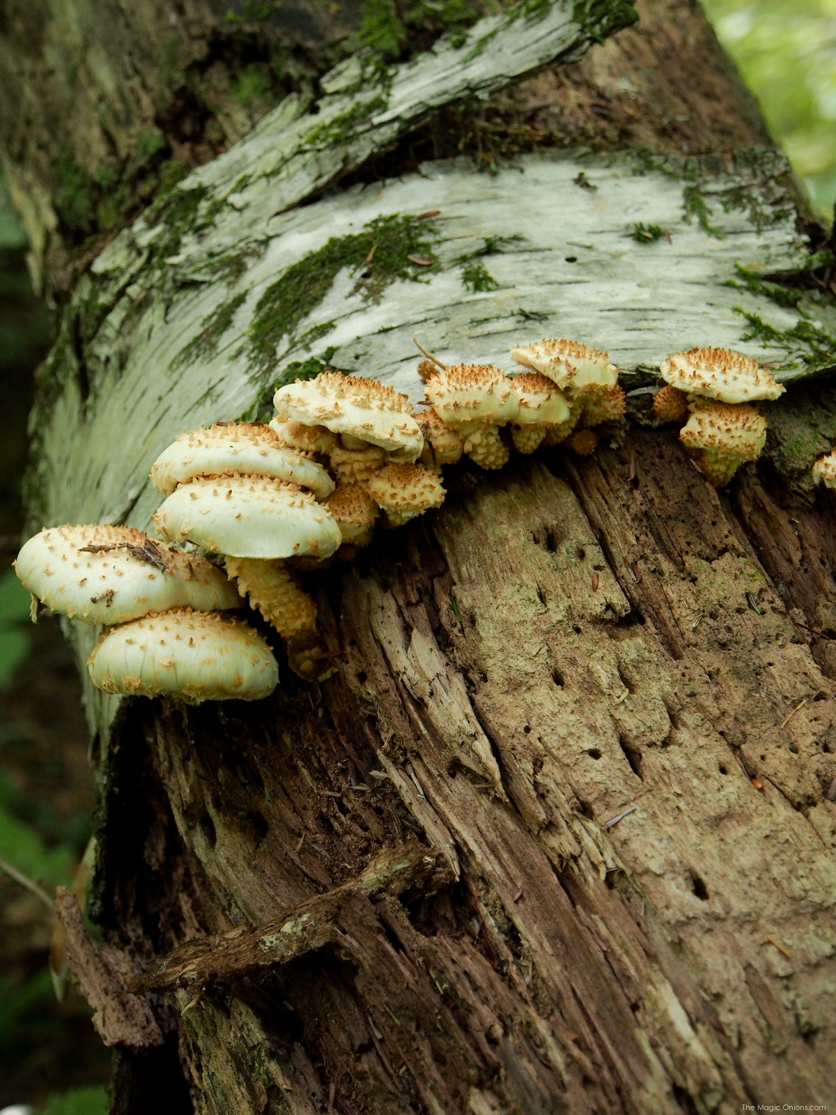 Mushrom Photo, Keene, New Hampshire, on The Magic Onions Blog