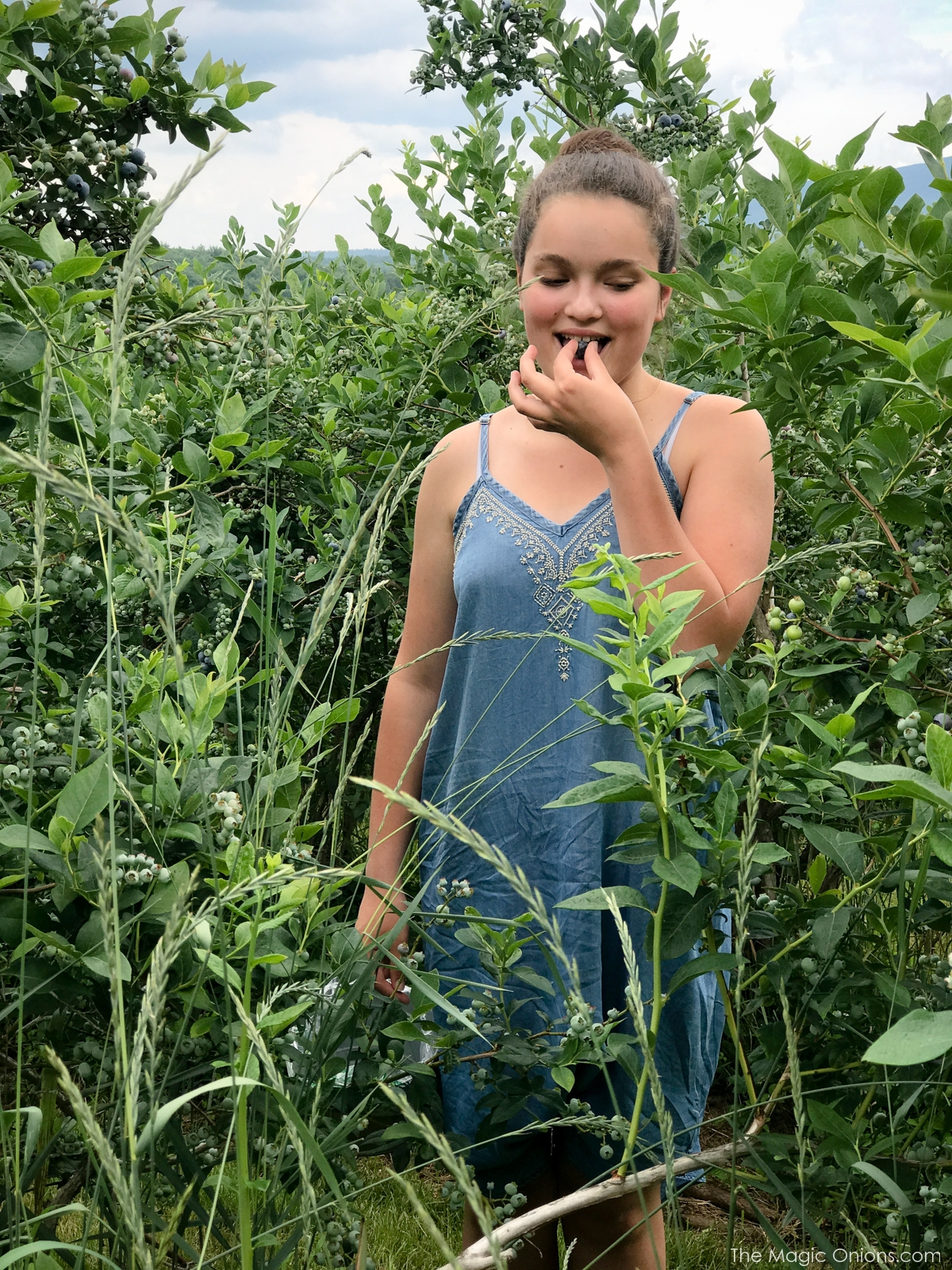 Picking Blueberries at Monadnock Berries, New Hampshire 11