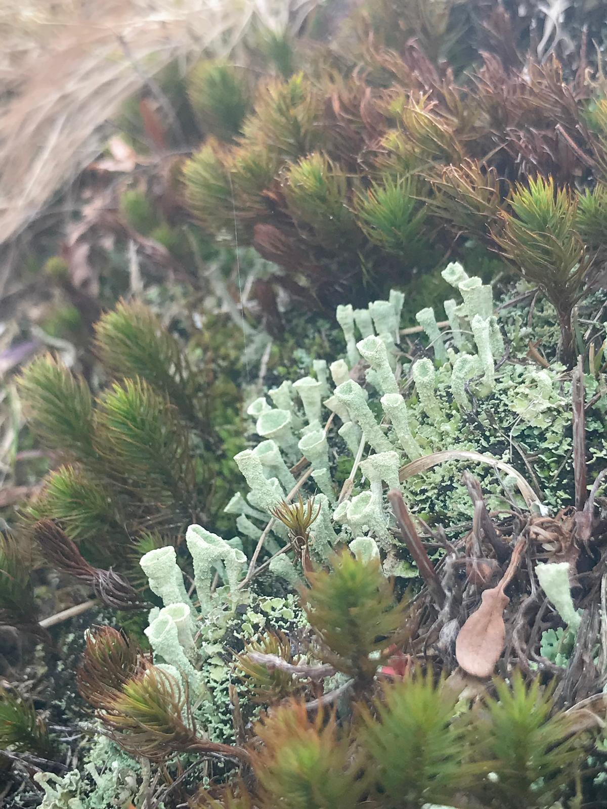 Magical Moss - Winter's Ending in New Hampshire - from The Magic Onions